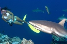 Bikini-clad photographer close to a shark