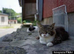 There's A Place In Japan Called 'Cat Heaven Island' And We Can't Wait To Visit
