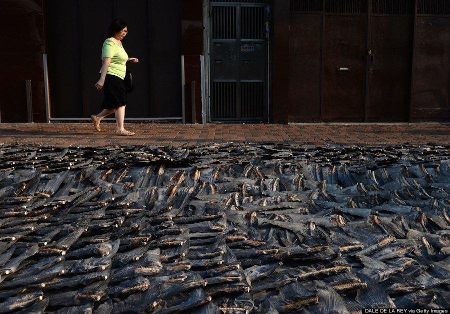 shark fins drying on a road in hong kong
