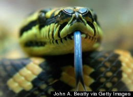 The World's Most Dangerous Snakes