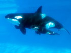 SeaWorld And Southwest Airlines To End Partnership