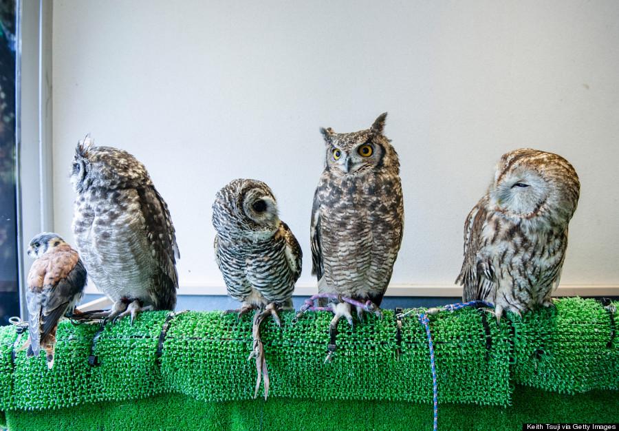 Japan S Owl Cafe
