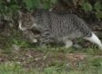 HUNDREDS OF CATS Take Over Island, Cause Meow-hem