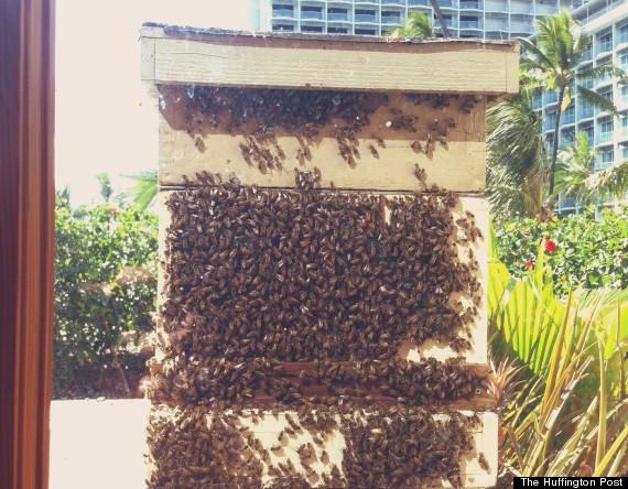hyatt bee apiary