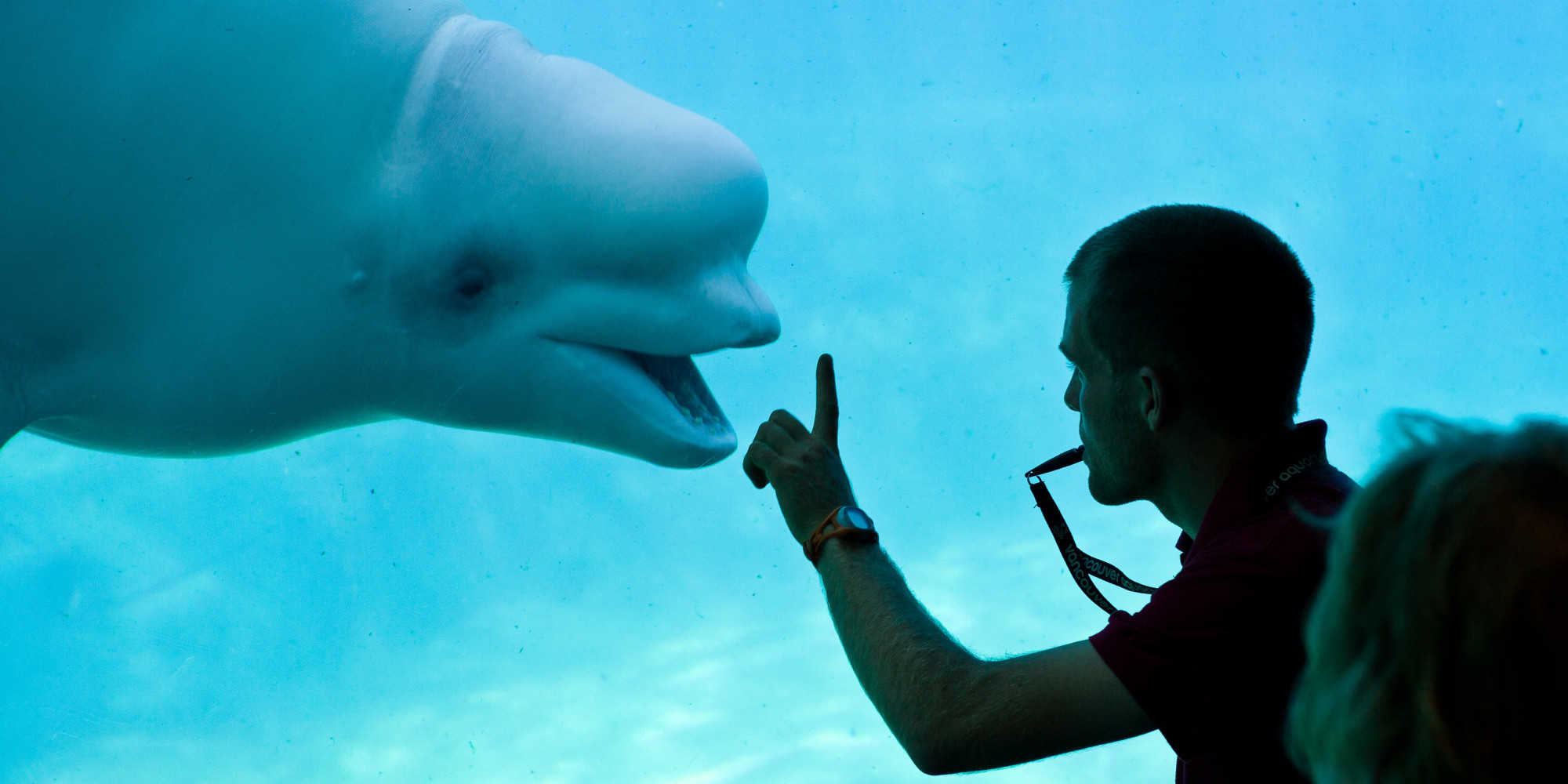 Vancouver Aquarium Restricted To Breeding Only Threatened Whale Dolphin Species