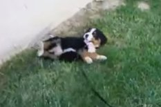 Puppy on hill | Pic: YouTube