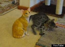 WATCH: Kitten Battles It Out With A Ceramic Cat