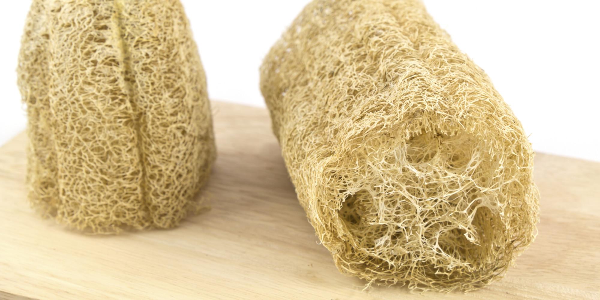 Not cias voc vai pensar 2 vezes antes de usar buchas - Esponja natural vegetal ...