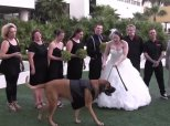 Jethro The Dog Wants Nothing To Do With Your Wedding Photos
