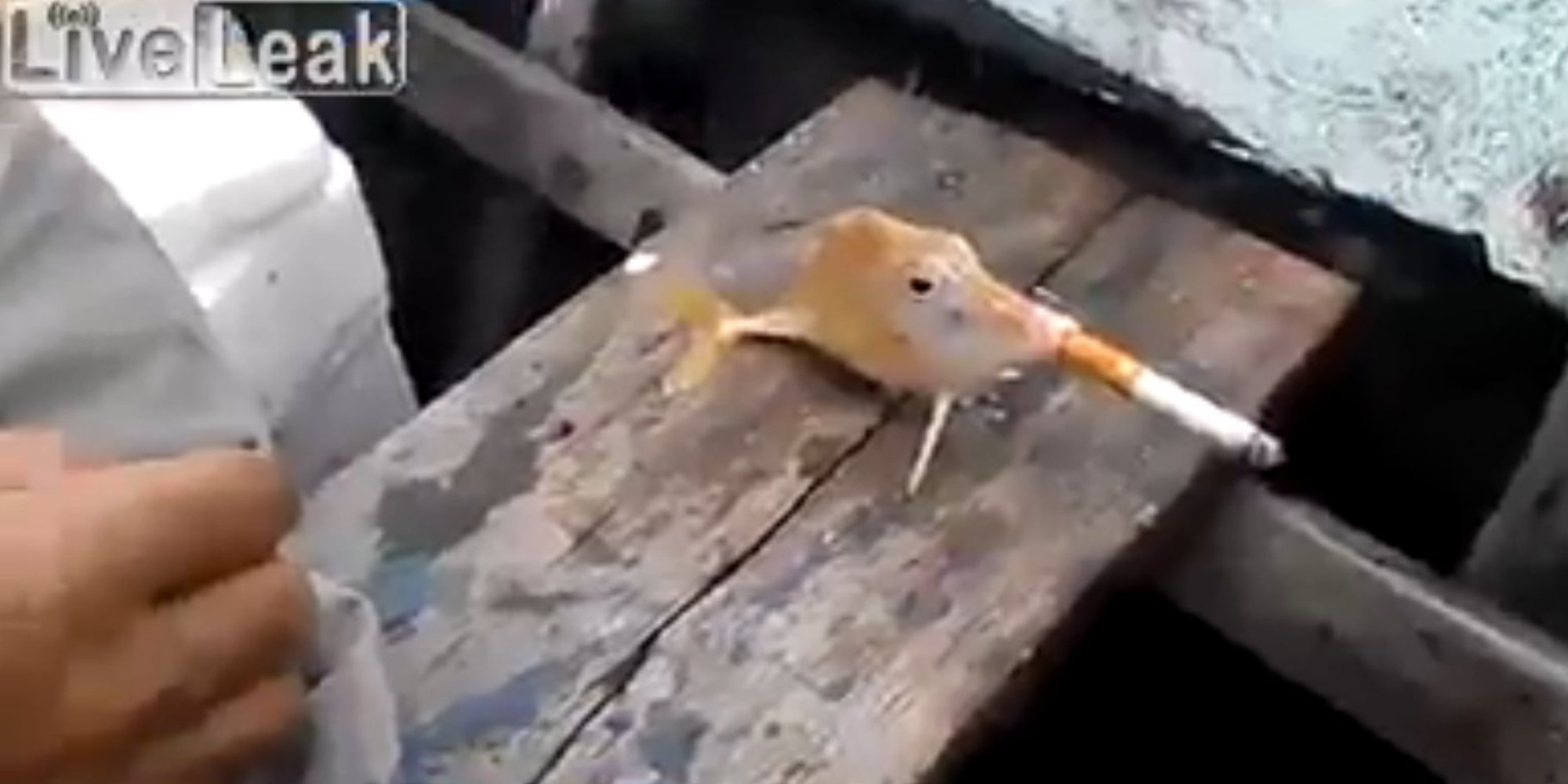Smoking fish video causes outrage at such blatant animal for Smoking fish in a smoker