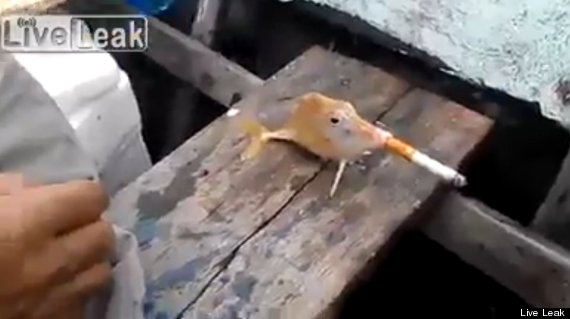 smoking fish