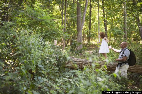 hiking woods