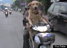 Hey, Look, It's Dogs On Hogs
