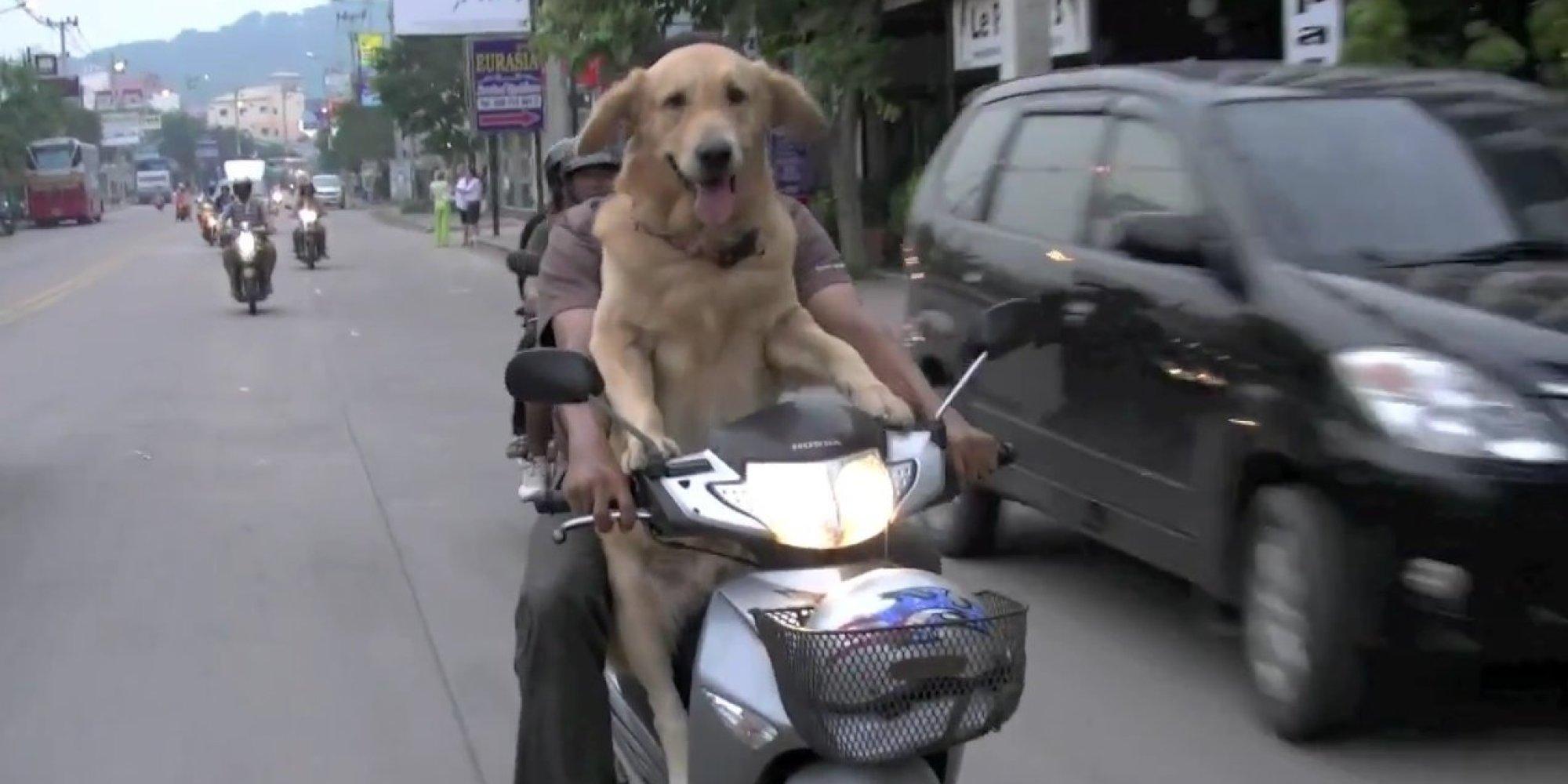 Dogs On Hogs Rebel Pups Take Summer Motorcycle Rides