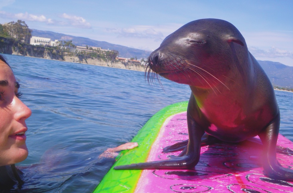 surfing with sea lion