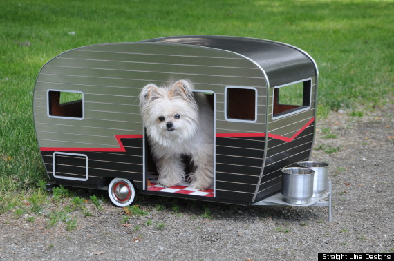 You Can Buy Your Dog A Customized Trailer For 800 PHOTOS