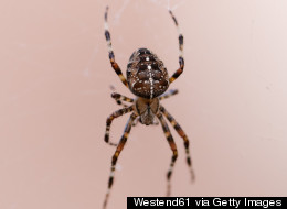 Woman In Wales Sets Home On Fire While Trying To Kill A Spider