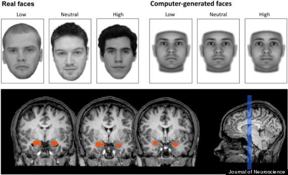 brain judges trustworthiness