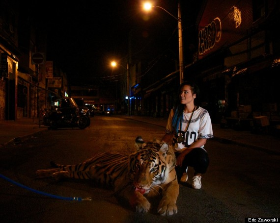 tiger toronto 4