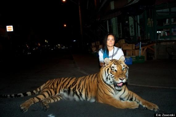 tiger toronto 1