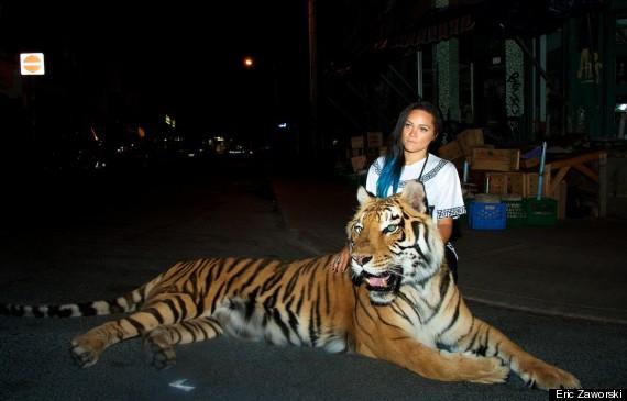 tiger toronto 2