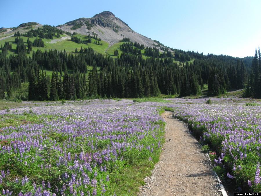 taylor meadow canada