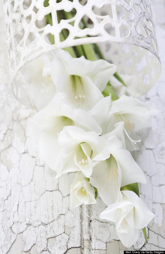 gladiolas vase
