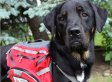 These 21 Service Dogs Help Their Owners Live, Work, Play
