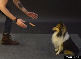 This Video Of Dogs Reacting To A Levitating Sausage Is Absolutely Priceless