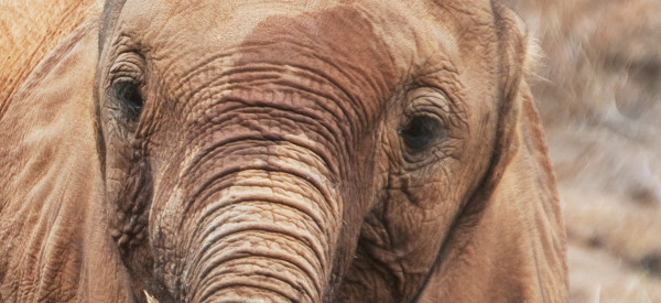 God's Ivory: The Role of Religion in the Elephant Poaching Crisis