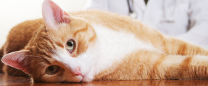 Pet Veterinarian
