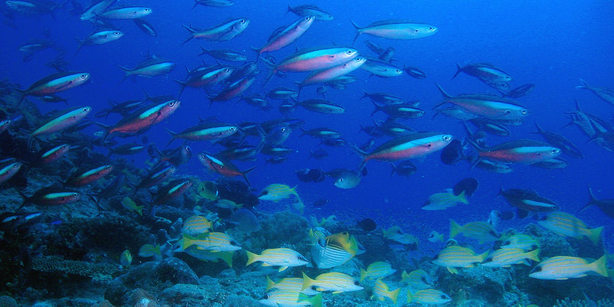 La vie sociale des poissons pierre sigler - Image poissons ...