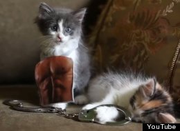 'Mr. Grey Will See You Meow': Kittens Reenact The 50 Shades Of Grey Trailer