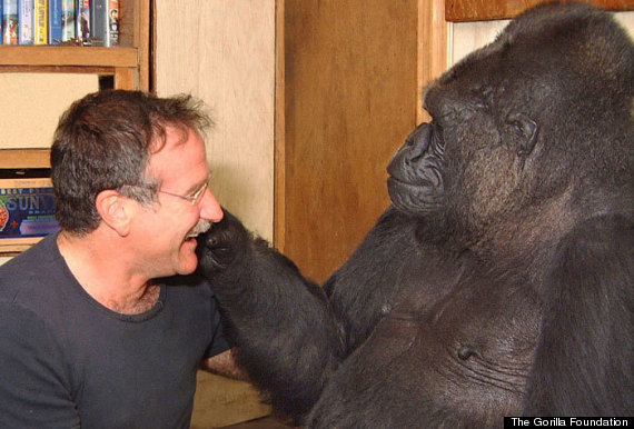 robin williams koko