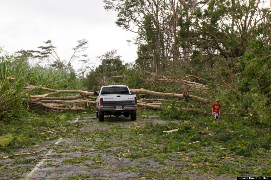 car blocked tree