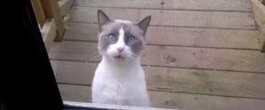 Strange Cat Miaow