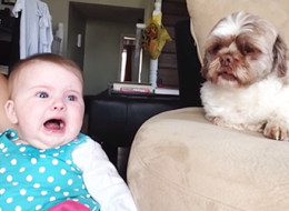 If Only All Arguments Sounded As Cute As This Baby And Dog's Debate