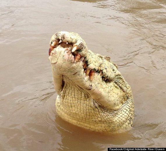 michael jackson crocodile