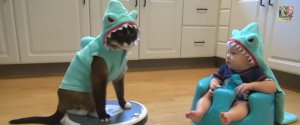 Roomba Shark Cat Baby
