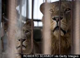 Graphic Pictures Show Gaza's Zoo Animals Have Also Become Victims Of War