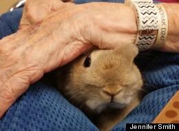 'Beautiful Little Soul': Therapy Bunnies Help Alzheimer's, Dementia Patients