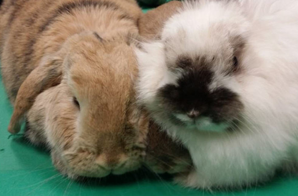 Beautiful Little Soul: Therapy Bunnies Help Alzheimers, Dementia Patients