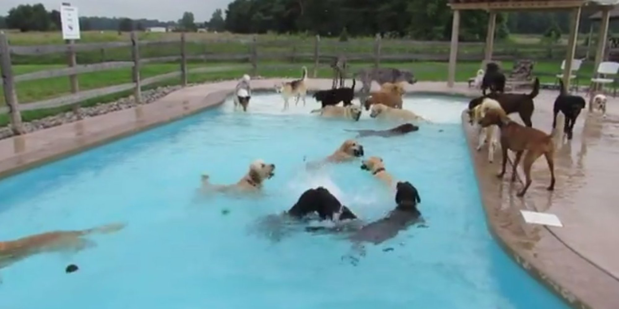 Nothing To See Here Just Some Dogs Having A Pool Party Huffpost Uk