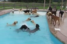 Dogs playing in a pool | Pic: YouTube