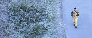 Toronto Frost