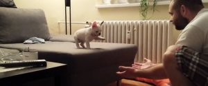 Rocky French Bulldog Puppy Jump Arms