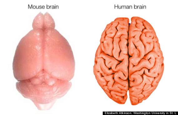 brain folds