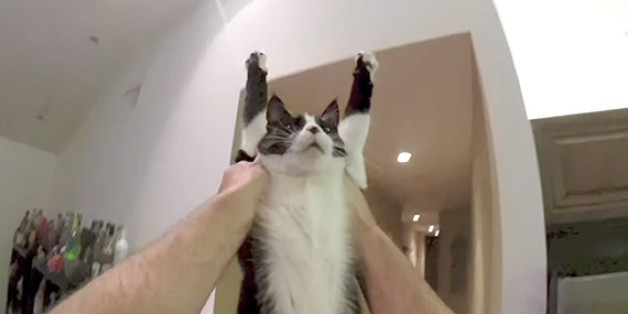 Sweet Cat Hug Captured On Gopro Puts You Right In The Action