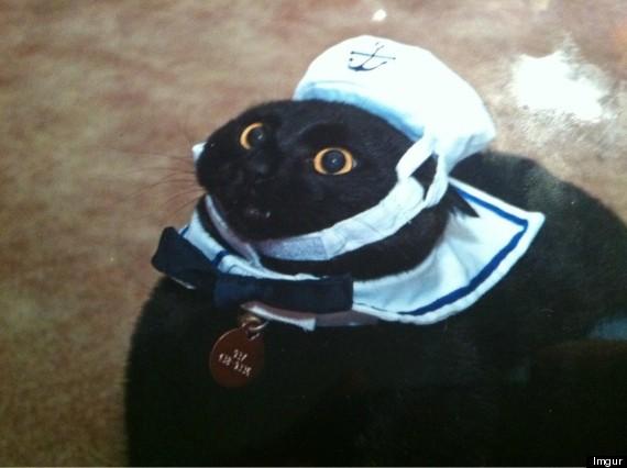 cat 14