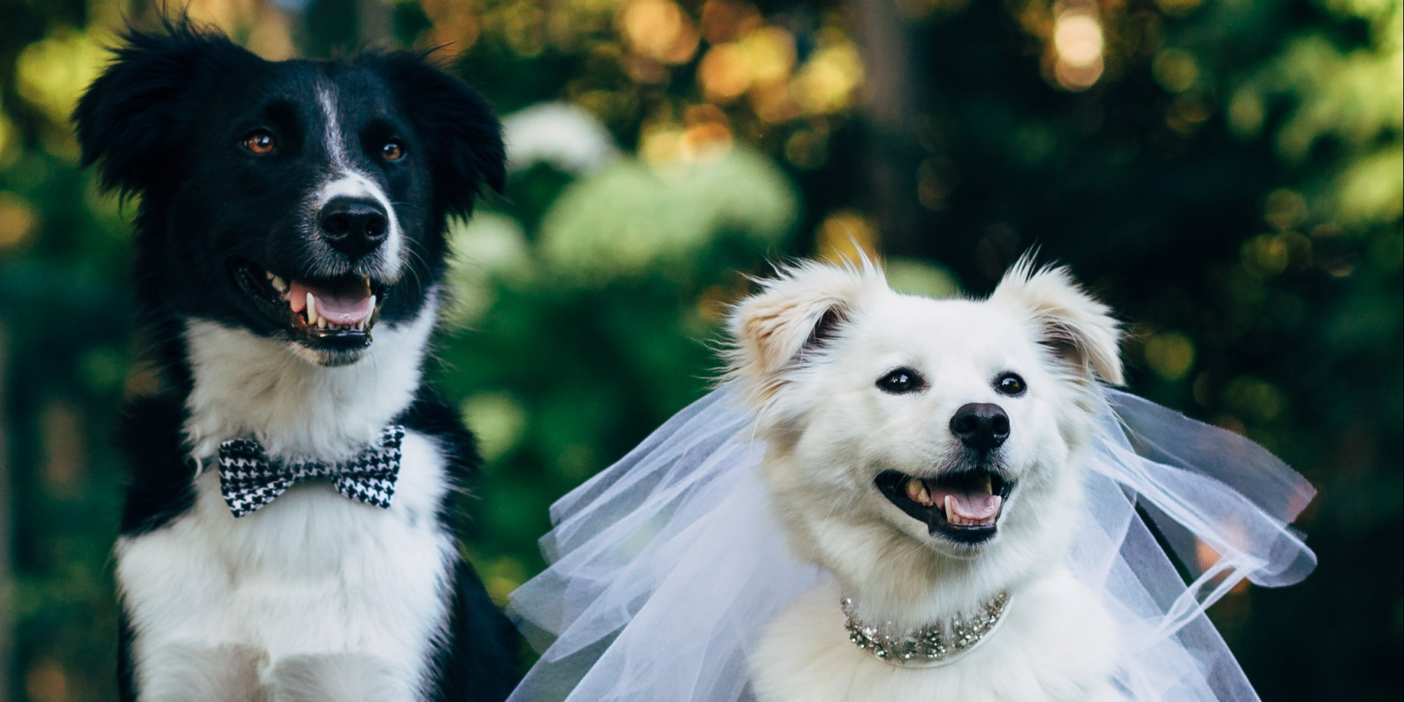 These Furry Friends Made Their Love Official In The Cutest Canine ...